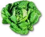 almirante vegetal