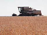 Conflicto por el trigo: Negocio con mucha espiga pero demasiada sombra