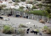 Puesteros desalojados esperan fallo para volver a sus tierras en Malarg�e