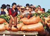 El precio de la yerba y la revolución