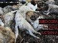 Más de 80,000 perros han sido asesinados por el gobierno de Ucrania, por Eurocopa 2012