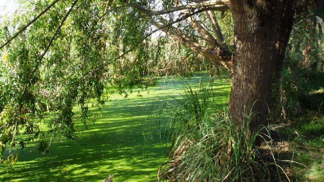 Laguna de Rocha: Bío...