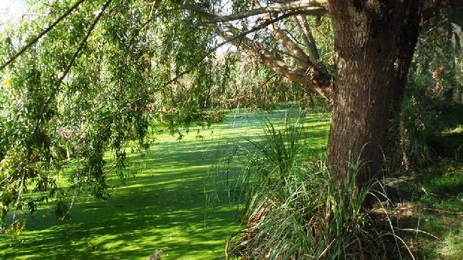 Laguna de Rocha: B�o...