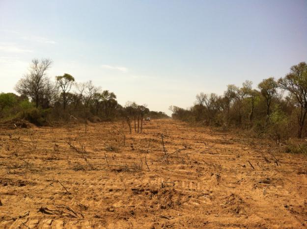 Bosques nativos (I):...