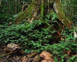 Ecuador: Miles de pe...
