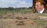 Ind�genas marchar�n en repudio a un legislador acusado de deforestar bosques nativos