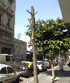 Podas en la ciudad de Buenos Aires