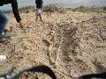 R�o Negro: Trabajan donde se hall� enterratorio aborigen