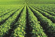 �Es posible la convivencia?. El desarrollo de la agricultura, campesinado y agronegocio