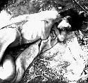 Survival muestra �cinco rostros del genocidio�...