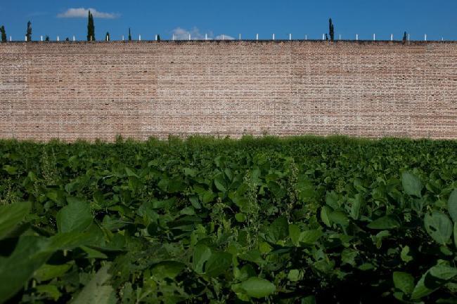 paisajes de soja (su...