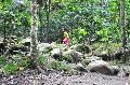 Los indígenas, convidados de piedra en las concesiones de tierras