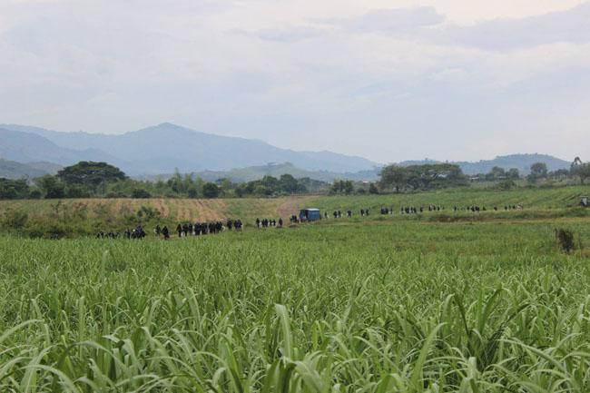 De manera violenta fuerza pública intenta desajolar a comunidades indígenas que liberan la Madre Tierra en Corinto Cauca