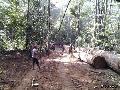 "Brasil: indígena amazónico asesinado por ""madereros"""