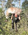 Muerto durante la cosecha. Un joven guaraní de 17 años falleció electrocutado...
