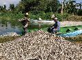 México: Culpan a Monsanto de muerte de peces en Cajititlán
