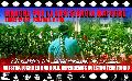 Chile: Marcha por la Resistencia Mapuche / lunes 12 de octubre