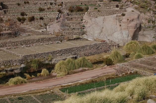 Cultivo En Terrazas Un Modelo Indígena De Seguridad