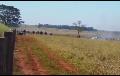 Un indígena muerto y varios heridos durante un ataque a una comunidad guaraní en Brasil