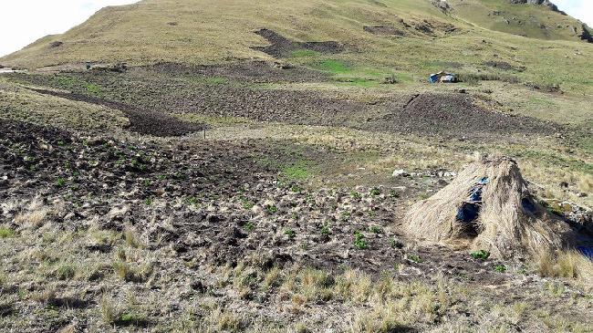 Perú: Otra vez Yanac...