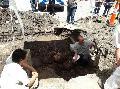 Los restos precolombinos viajaron de Tafí Viejo a la capital y serán analizados en la UNT