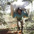 El Ministerio de Trabajo de Nación no cumple con las y los trabajadores tareferos