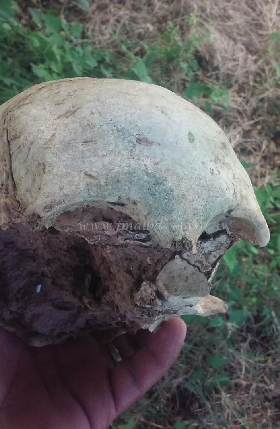 Encontraron restos h...
