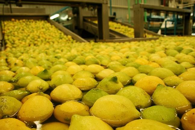 Limones...